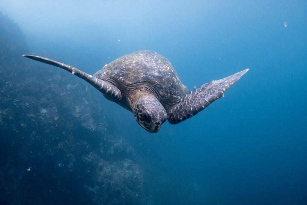 underwater-sea-voyage-jpg
