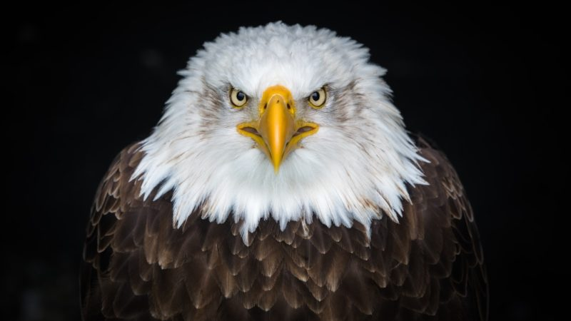 eagle-defines-immigration-jpg