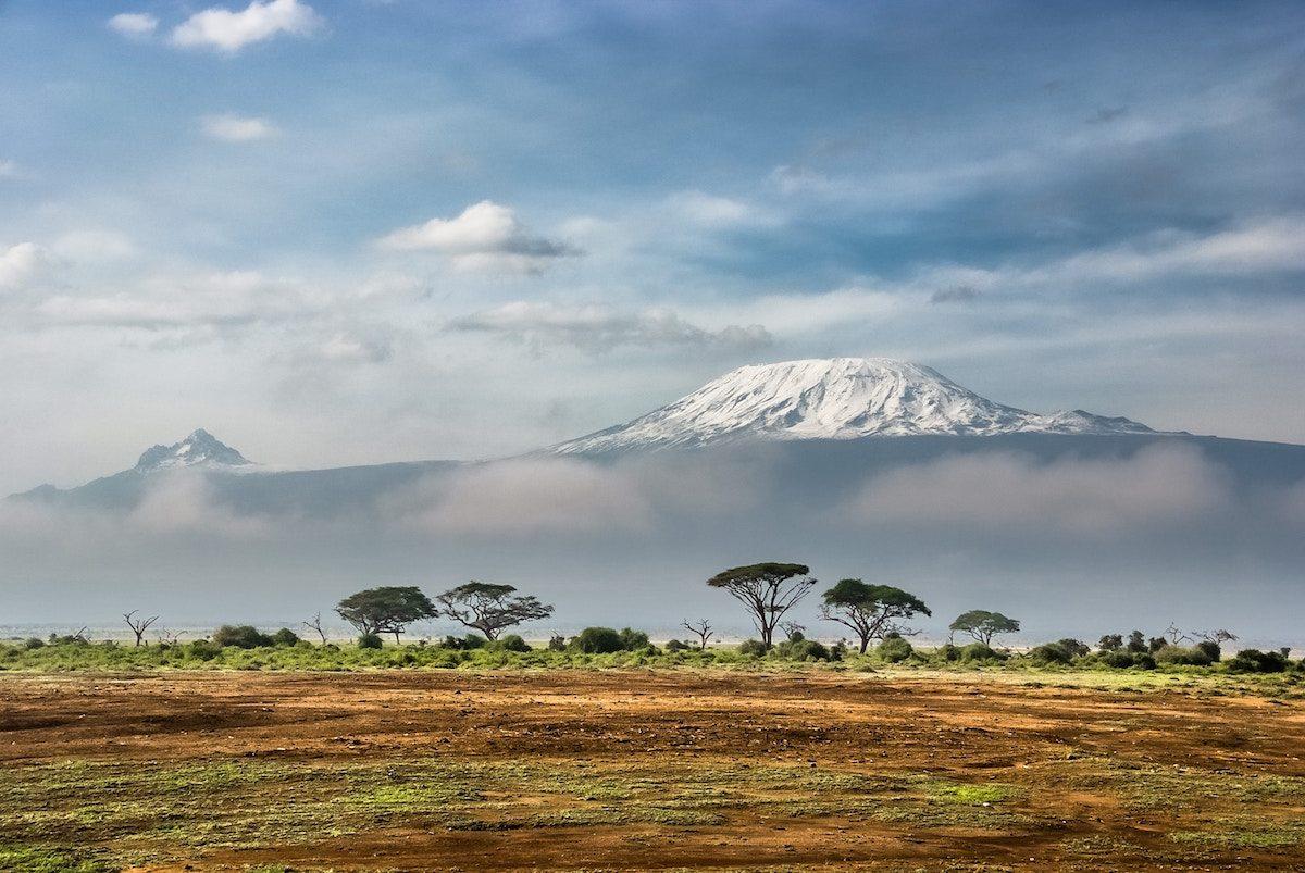 entangled-heart-in-Africa-jpg